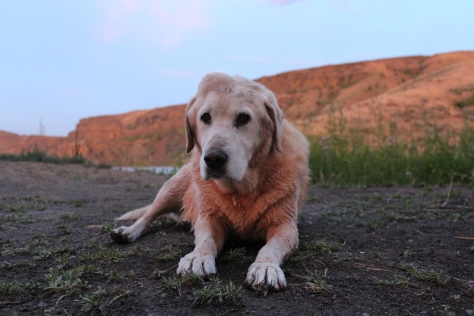 Buddy at Summer Falls, June, 2017